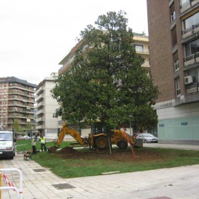 Arvena-jardineria-plantaciones-3