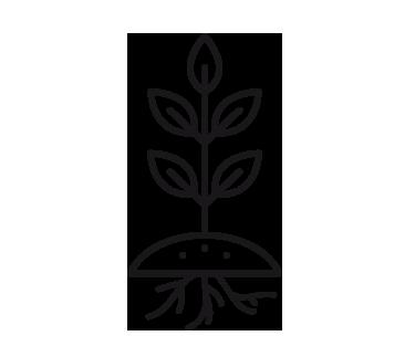 Arvena-Jardineria_Exterior-Plantas