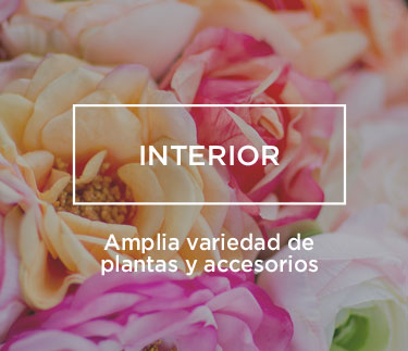 Arvena.-Jardineria-plantas-interior