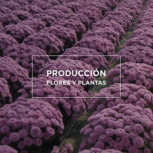 Arvena-Jardineria-Flores-Plantas