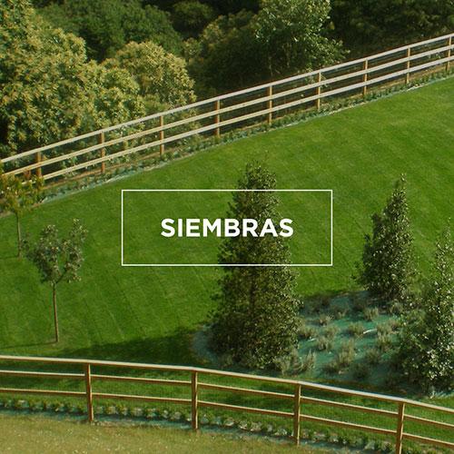 Arvena-Jardineria-siembras
